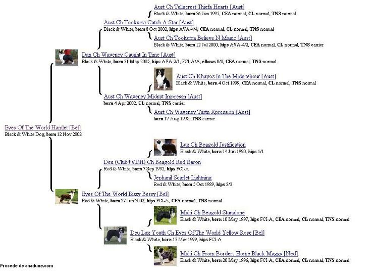 Border Collie Pedigree